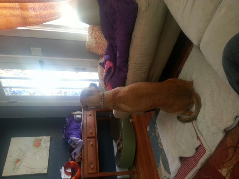 Mike stayed home with the pups today.  Bailey was taking a turn at neighborhood watch from the floor.