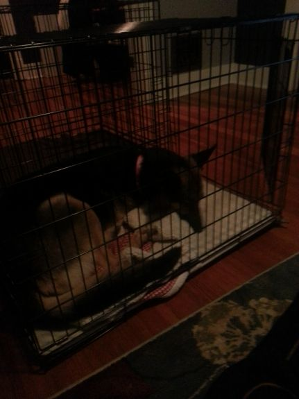 Delilah decided she likes Bailey's crate.  So she randomly hopped in their and laid down.  Bailey likes Delilah's crate too.  What a bunch of weirdos.