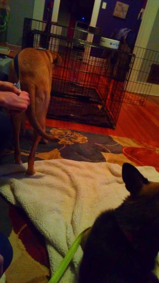 Bailey trying to ignore Delilah...