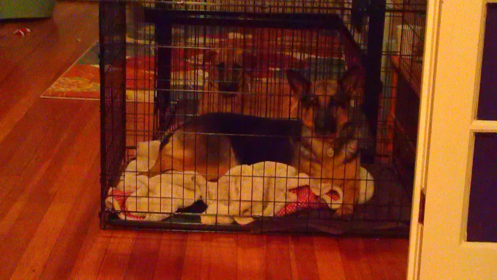 While we were making dinner, we put the girls in their crates (because we were advised not to let them roam around unsupervised).  Cute part is that they were laying in the exact same position only mirrored from each other.  Well, I thought it was cute anyway.