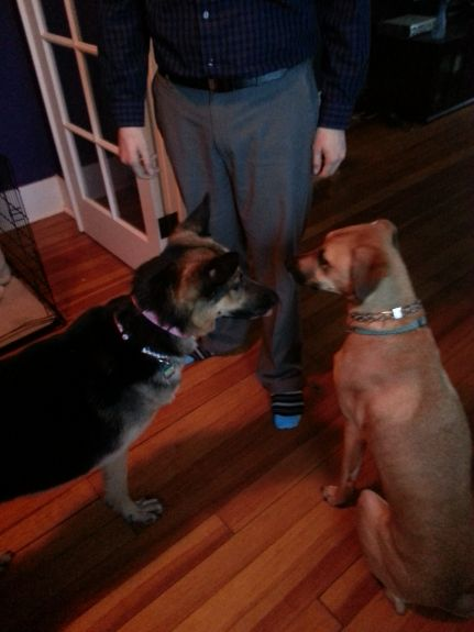 Girls hanging out with Mike after work, lots of sniffing, lots of kisses