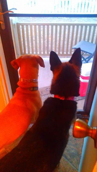The girls looking outside waiting for Mike to come inside.
