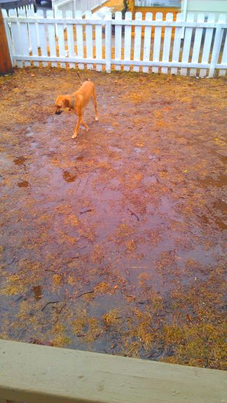 Another picture that clearly isn't from today.  That's my swampy backyard and why we've done so much paw wiping.