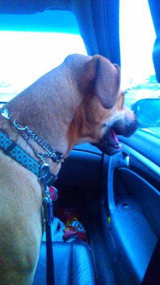 Bailey cruisin' copilot